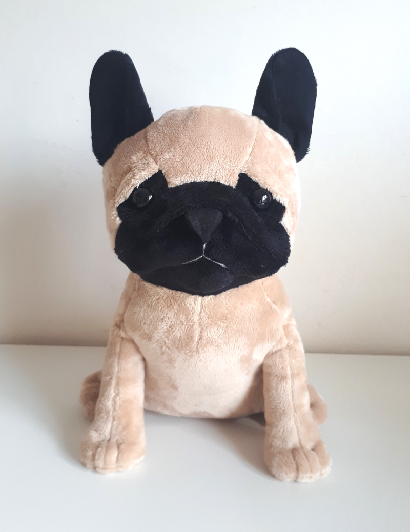 Reg French Bulldog